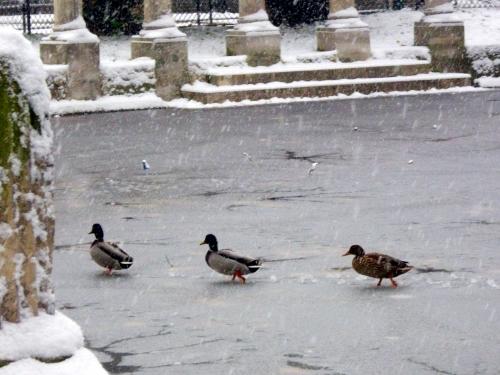Les trois canards.jpg